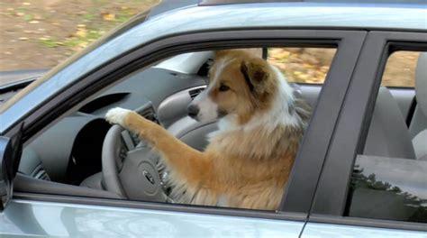 Subaru Eschews Super Bowl For Doggy Ads