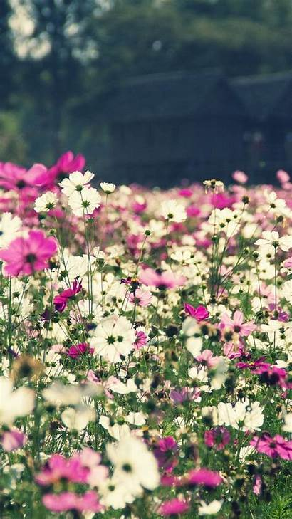 Iphone Spring Floral Wallpapers Flower Plus Aesthetic