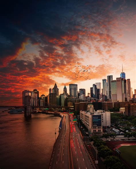 places nyc bird dark sunset  york city sunset