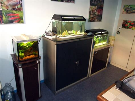 bureau aquarium association comtoise d 39 aquariophilie