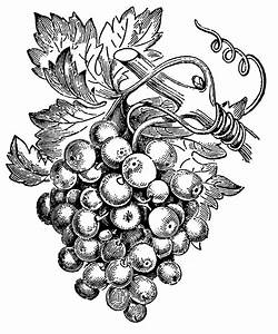 grape vine clip art Grape Art Pinterest