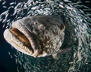 Amazing fish photos from the University of Miami ...