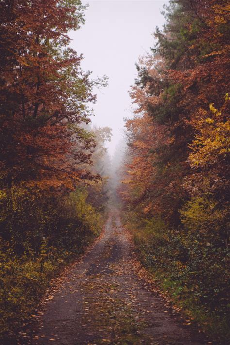 pathway  tumblr