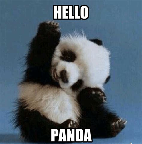 Cute Panda Memes - 20 incredibly cute and funny panda memes love brainy quote