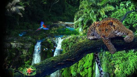 amazon jungle tree leopard parrots wallpaper hd