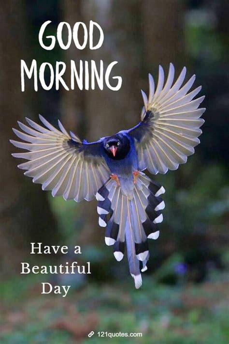 beautiful good morning images  birds  quotes