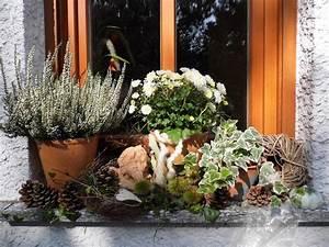 Aussaat Auf Der Fensterbank : herbstdeko auf der fensterbank bilder und fotos garten pinterest fensterb nke ~ Whattoseeinmadrid.com Haus und Dekorationen