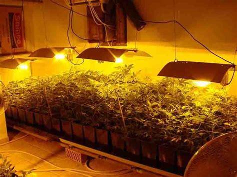 chambre culture indoor les différentes familles du cannabis biotops biz