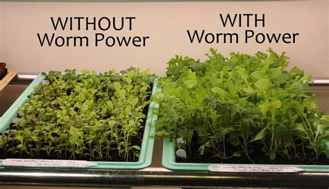 agrobusiness vermiculture earthworms farming