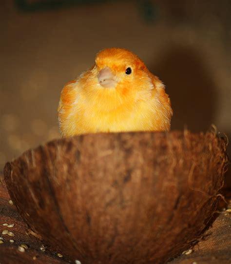 Mango-Marakuja Foto & Bild | tiere, haustiere, vögel ...