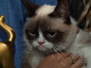 Grumpy Cat, meet Lil Bub; Lil Bub, meet Grumpy Cat - YouTube