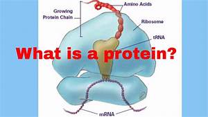 What Are Proteins Made Up Of