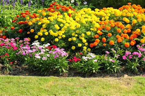 arbuste en pot plein soleil plante en pot exterieur plein soleil 28 images les 25 meilleures id 233 es concernant