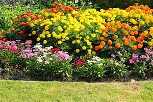 Plantes D Ombre Extérieur : plante fleurie d 39 ext rieur liste ooreka ~ Melissatoandfro.com Idées de Décoration