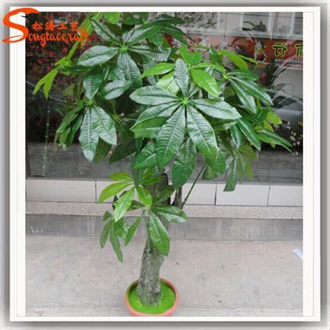jenis tanaman hias ruangan tanaman plastik
