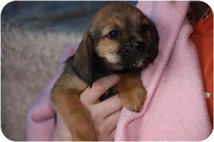 lexi | Adopted Puppy | Prince William County, VA ...