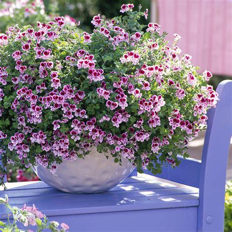interieur d une fleur plantes d int 233 rieur parfum 233 es une s 233 lection s 233 duisante