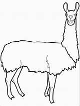 Llama Coloring Animal Pdf Yama America South Animals Groups Animales Peruvian Gaddynippercrayons Social Printables sketch template