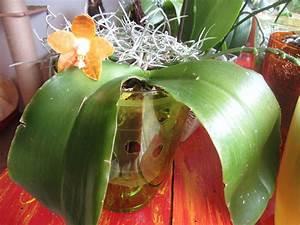 Orchideen Im Glas : re habitate orchideen im glas mal anders 13 ~ A.2002-acura-tl-radio.info Haus und Dekorationen