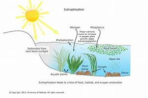 Freshwater Macroinvertebrates  U2014 Science Learning Hub