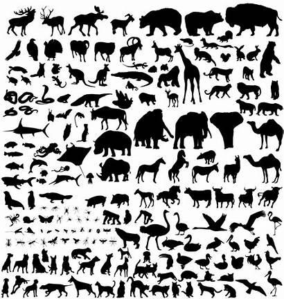 Species Animals Origin Darwin Animal Silhouette Silhouettes