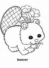 Beaver Coloring Pages Books sketch template