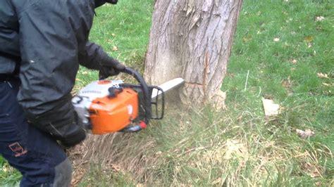comment couper  arbre