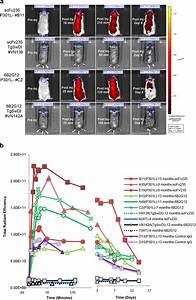 n vivo imaging of tau inclusions in P301L mice after ...