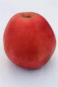 Apfelbaum Hochstamm Kaufen : apfel spartan hochstamm malus frisch aus der baumschule kaufen ~ Orissabook.com Haus und Dekorationen