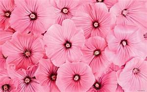 Backgrounds Pink Cute Flowers Tumblr Flower Wallpaper ...