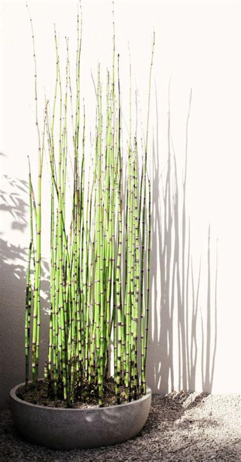 comment planter des bambous dans jardin