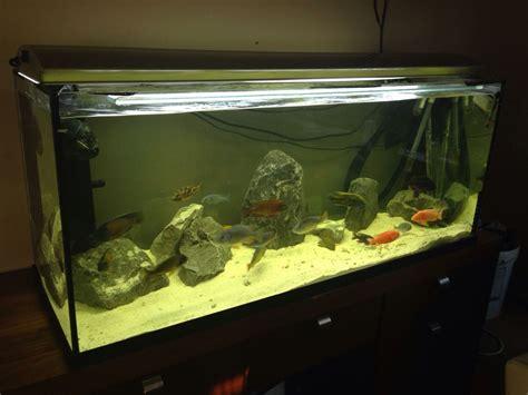 3ft aquarium for sale 3ft fish tank for sale boston lincolnshire pets4homes 2017 fish