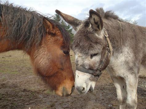 donkey horse horses donkeys animals friends cute uploaded user