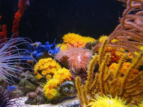 rss mariusz sun coral reef   azoox coral paradise
