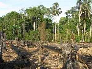 Amazon Rainforest Deforestation Animals
