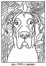 Dane Coloring Danes Printable Moose sketch template