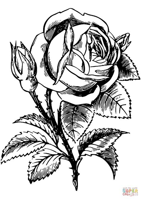 rose coloring page  printable coloring pages