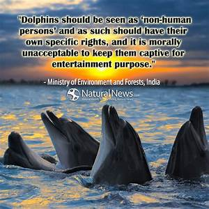 Dolphins should... Non Human Quotes