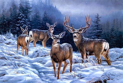 Reindeer Wallpaper Hd by Reindeer Desktop Wallpapers 44 Hd Wallpapers Hd Pics