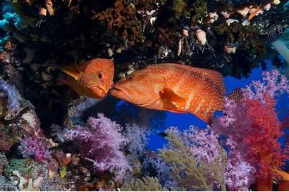 Underwater Fish Geographic National Animals Coral Desktop