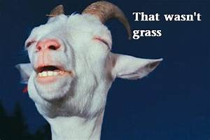Funny Goat - That wasn't grass