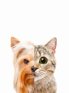 Half Cat Half Dog Face | www.pixshark.com - Images ...