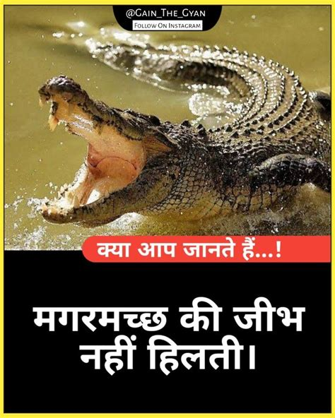 Daily #facts in hindi, hindi facts amazing facts , indian facts | Daily facts, Facts, Fun facts