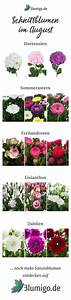 Welche Blumen Blühen Im August : die 275 besten bilder von hochzeit brautstr u e sommer wedding bouquets boyfriends und ~ Orissabook.com Haus und Dekorationen