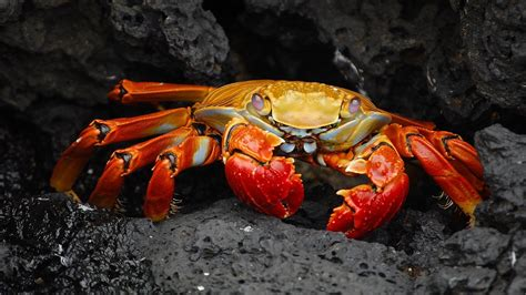 Wallpaper Imagenes De Free by 4k Crabs Wallpapers High Quality Free