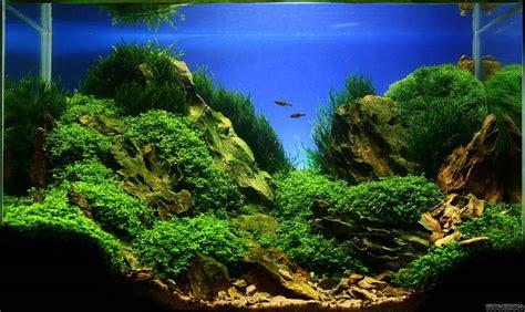 aquascaping tanks rocks flowgrow aquascape aquarien datenbank