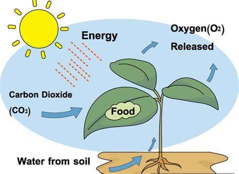 photosynthesis diagram unmasa dalha