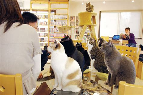 cat cafe meow meow meow vice united states