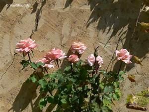 Nuance De Rose : nuance rose yourshop ~ Melissatoandfro.com Idées de Décoration