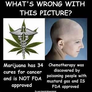 positive medical marijuana statistics
